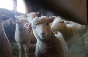 Refrigeración en granjas de animales
