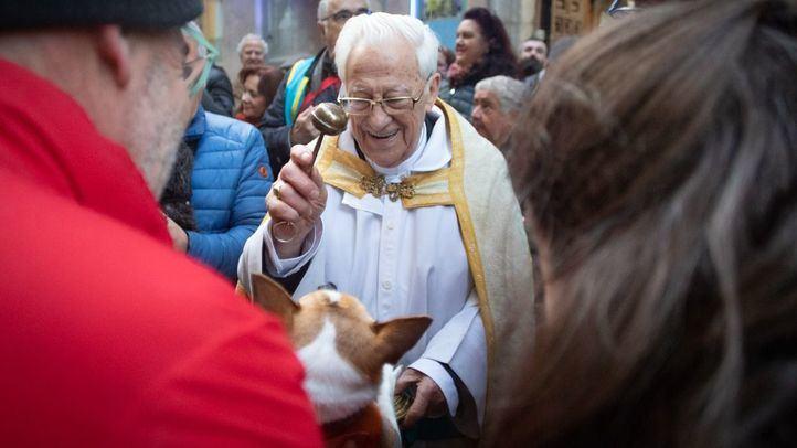 Protectoras animales critican que se 'elimine el espíritu animalista' de San Antón