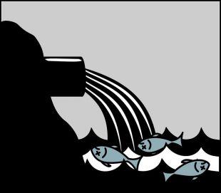 Muerte del Mar Menor a causa de los fertilizantes nitrogenados