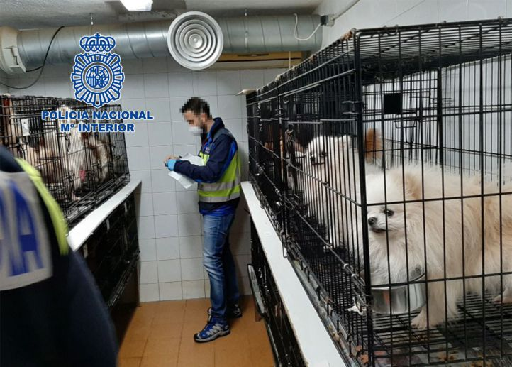 Los canes estaban en un zulo construido en el sótano de una vivienda en pésimas condiciones.