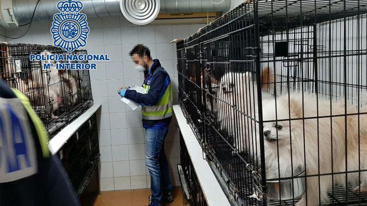 Dos protectoras acogerán a los perros rescatados de los criaderos ilegales