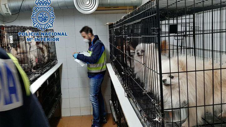 Libertad para uno de los detenidos por los criaderos ilegales