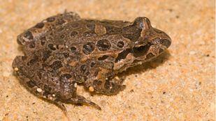 El Parque Regional del Sureste, hogar de numerosos anfibios y reptiles