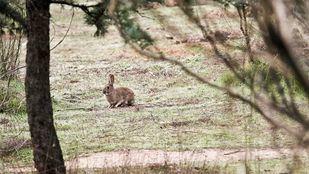 Un conejo otea a la distancia.