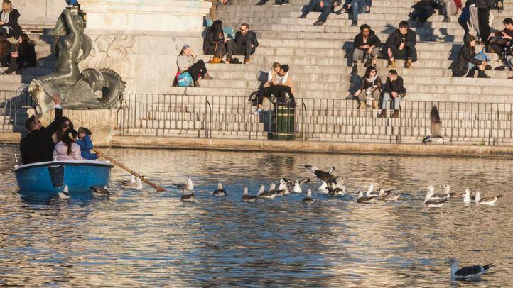 Animalistas piden que se alimente a los patos y gatos de El Retiro