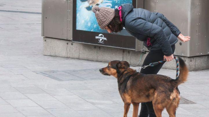 Las protectoras desmontan el bulo de la adopción de perros para salir del confinamiento
