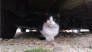 Sanidad advierte de la posibilidad de contagio de COVID-19 a perros, gatos y hurones