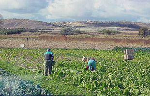 Agricultores piden que se abra ya la campaña de riego en la llamada 'despensa hortícola madrileña'