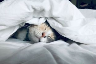 Cinco tips para elegir la cama articulada correcta