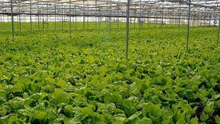 La Comunidad ha aprobado un nuevo plan de apoyo al campo y a la industria alimentaria