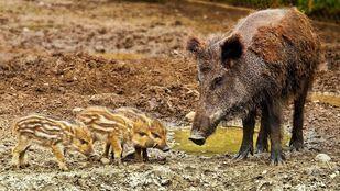 Se autorizará la captura de especies que dañen explotaciones agrarias y causen accidentes