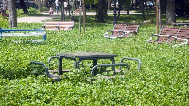 Parque de la Dehesa Boyal.