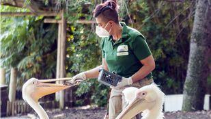 La vida sigue igual para los animales del parque Faunia