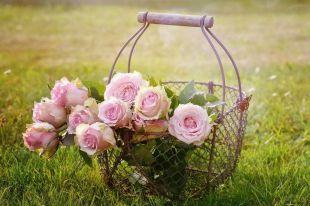 ¿Qué tipo de flores son las más recomendadas para regalar?
