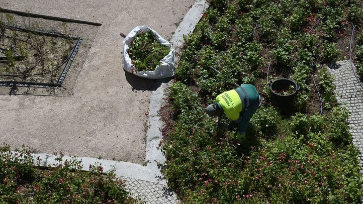 Madrid refuerza la limpieza de las zonas verdes