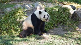 Los animales del Zoo Aquarium volverán a recibir visitas