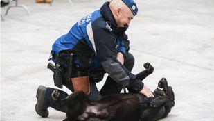 Un hombre, arrestado por maltratar a su perro y pegar a varios agentes