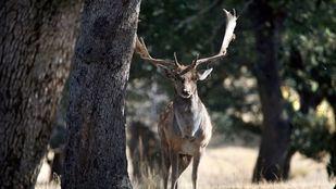 Detenido por cazar y matar furtivamente a 15 animales en una finca de Villamanta