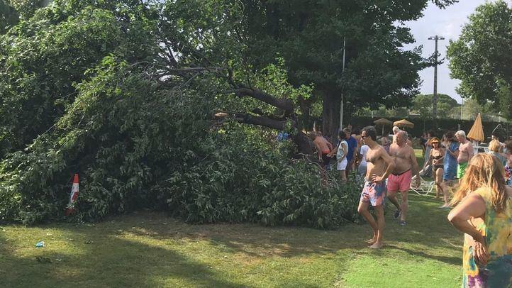 Una adolescente de dieciséis años ha sido trasladada leve al Hospital de La Princesa tras caer un árbol en una zona de piscina del Club de Campo Villa de Madrid