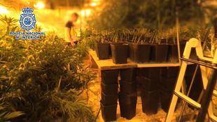 Cae un gran entramado de tráfico de heroína y marihuana