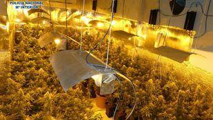 Imagen de archivo del desmantelamiento de una plantación de marihuana.