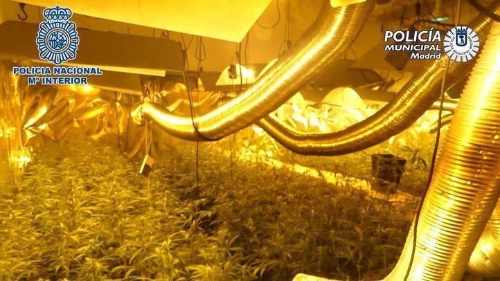 Arrestado por cultivar marihuana en casas deshabitadas de sus vecinos