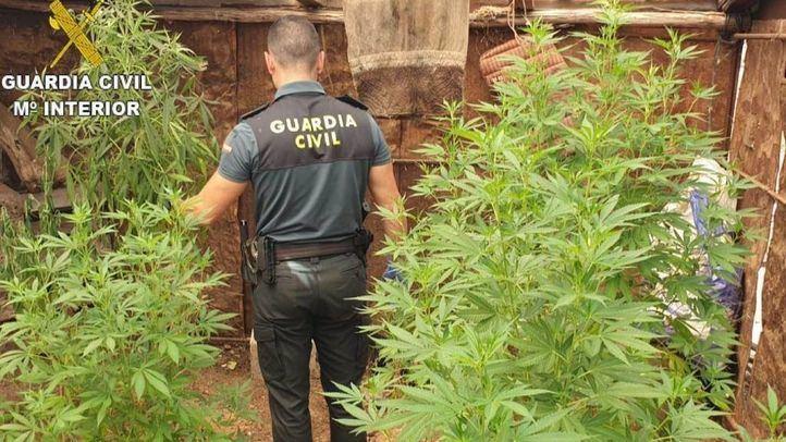 Liberadas ocho víctimas de trata obligadas a cuidar plantaciones de marihuana