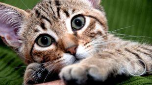 Regresa el Día Internacional del Gato