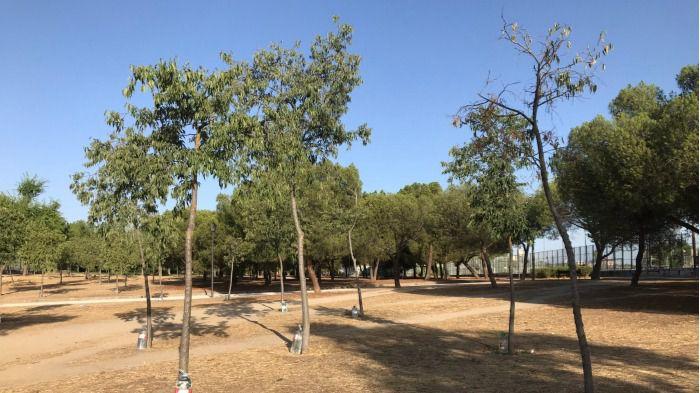 La sequía y la falta de mantenimiento amenazan al parque de las Cruces de Carabanchel