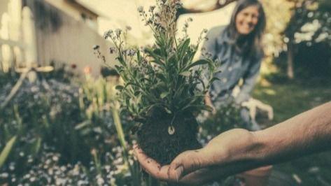 5 razones para practicar jardinería