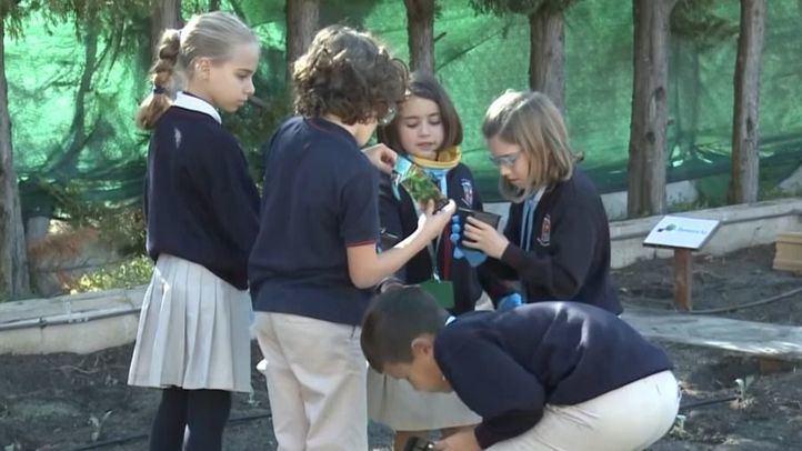 Alumnos cuidando el huerto de su colegio