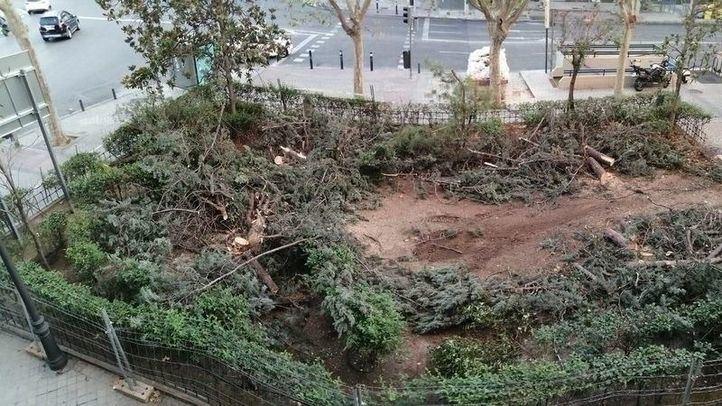Contra la tala de árboles en la plaza del Niño Jesús: recogidas 1.500 firmas en 10 días