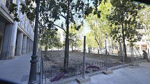 La lucha incansable de los vecinos de Retiro por recuperar los árboles de la plaza del Niño Jesús