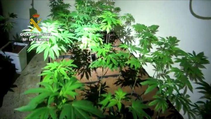 Un incendio en un cultivo de marihuana afecta a siete hectáreas de pasto