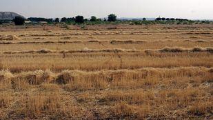 Campo de cereal segado en Madrid
