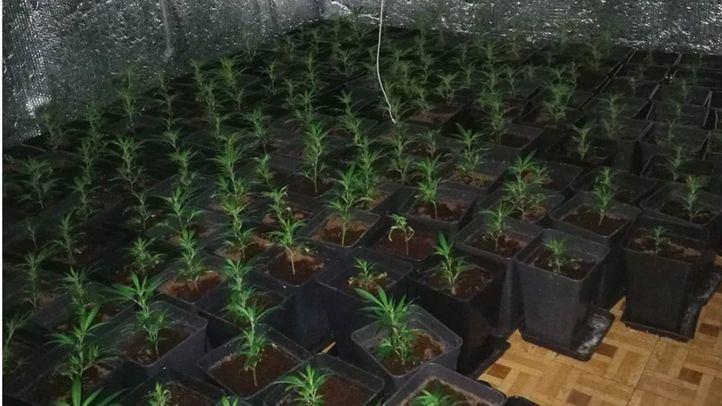 La Policía descubre una plantación de marihuana en un piso okupado en Vallecas