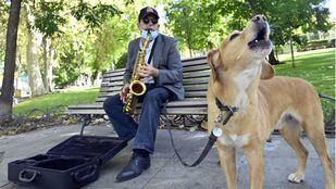 El saxofón y Golden, el perro que canta al ritmo de la música