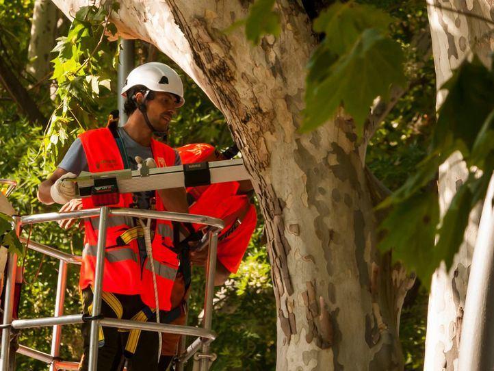 Árboles de Madrid: las inclemencias ponen a prueba la conservación del patrimonio verde de la capital