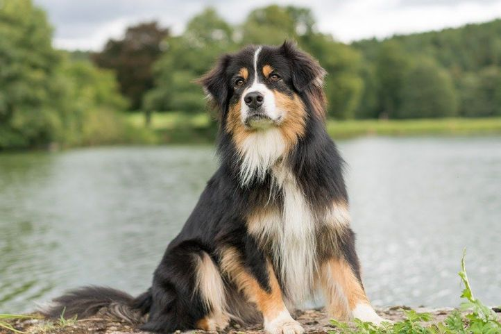 Cómo elegir el mejor perro para nuestro hogar