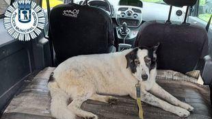Sira, la perra rescatada en los túneles de la M-30