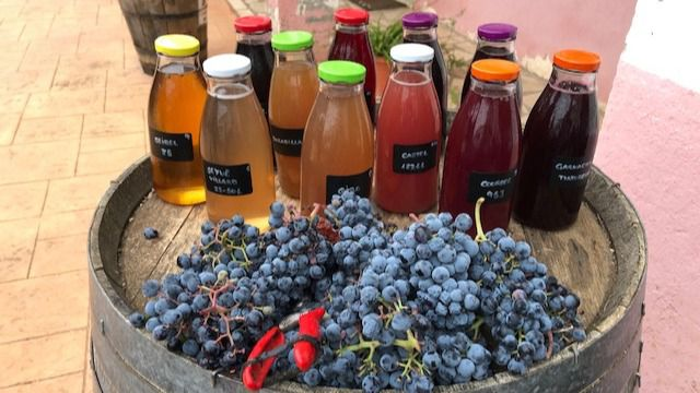El IMIDRA trabaja en una nueva línea de negocio basada en la uva para los agricultores de la región