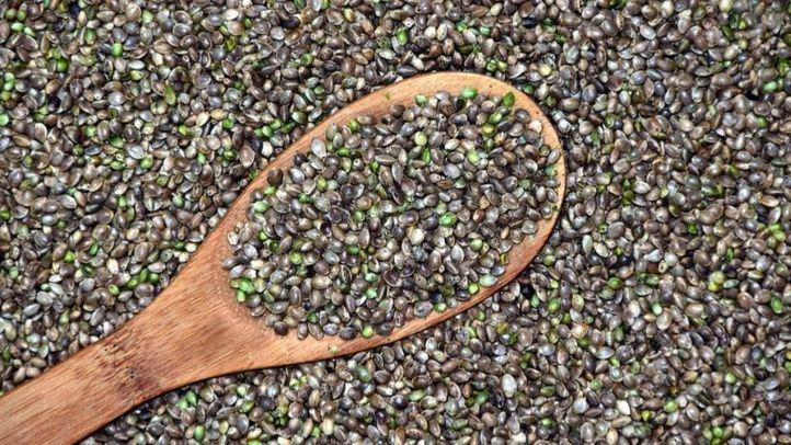 Diferencias entre elegir semillas a granel y semillas de banco