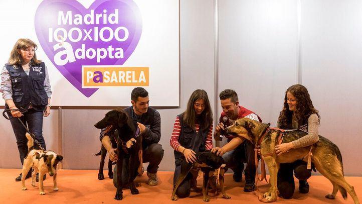 Ifema celebra '100x100 Mascota 2020 On Line' este fin de semana