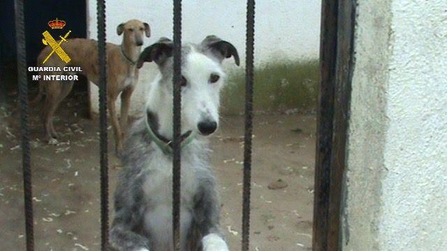 Liberados más de cien perros en una perrera clandestina en Parla