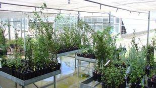 Cultivo de plantas de alcornoque