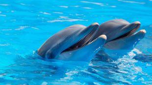 Lugares para nadar con delfines en Cancún