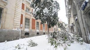 Un árbol cae en las inmediaciones de la Puerta del Sol ante la gran cantidad de nieve
