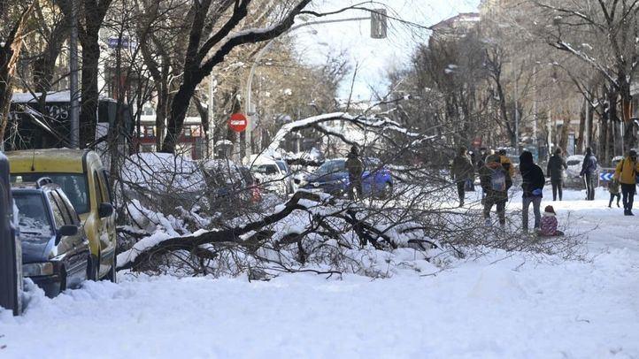 Más de 150.000 árboles de zonas verdes de la capital, afectados por la gran nevada
