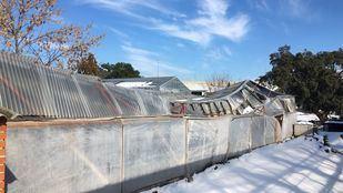 Viveros de la asociación La Veguilla, destrozados a causa del temporal provocado por