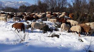 Filomena deja sin comer a más de 500 animales, derrumba naves y hunde invernaderos